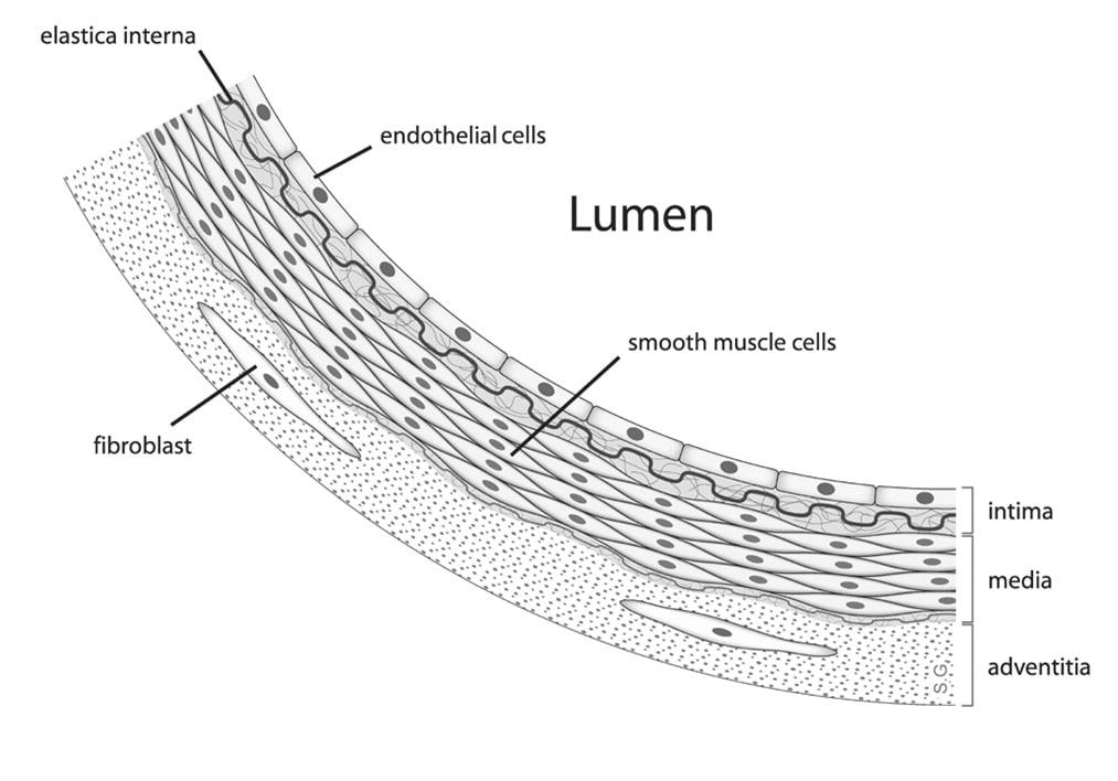 Disfunzione Endoteliale - vasodilatazione endotelio-dipendente